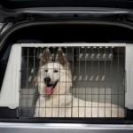 Eine Hundetransportbox fürs Auto. Foto: © amidala - Fotolia.com