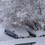 Vorbeugen: Wer unter Bäumen, neben der Hecke oder an der Hauswand parkt, muss generell weniger kratzen?